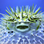 Dinosaur or Puffer Fish: Which One Are You?
