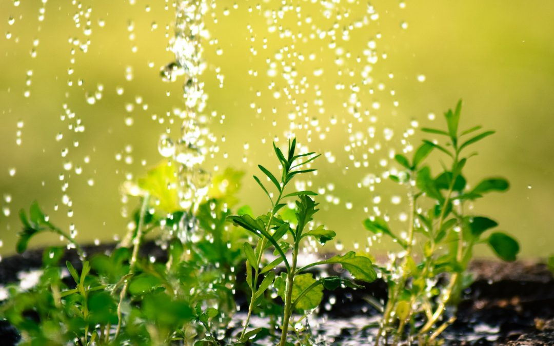 Contemplations in the Garden – Using the Power of the Elements to Fuel Spiritual Growth